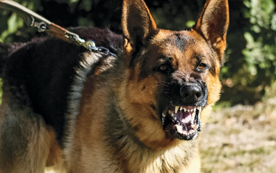 Prison Bill: Security dogs for HMP; inmates may be asked for semen
