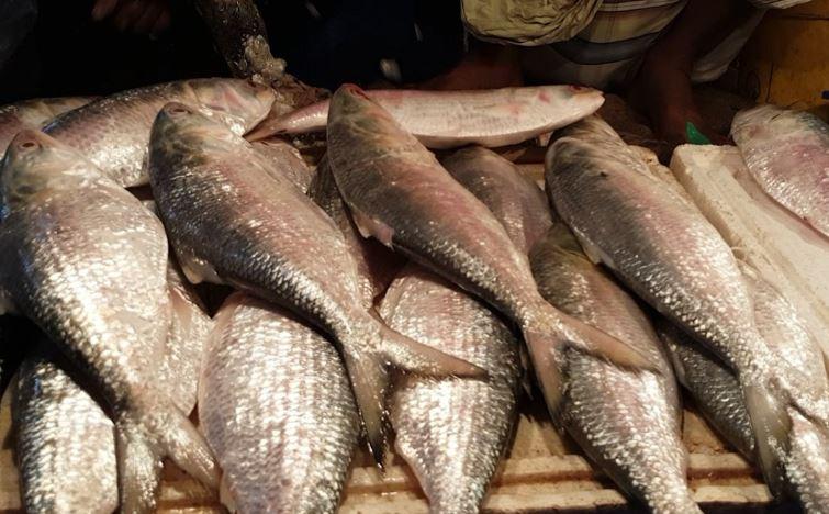 BVI seeing surge in fish poisoning
