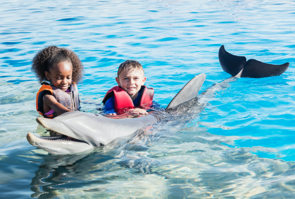 BVI 'losing lots of revenue' with Dolphin Discovery still away