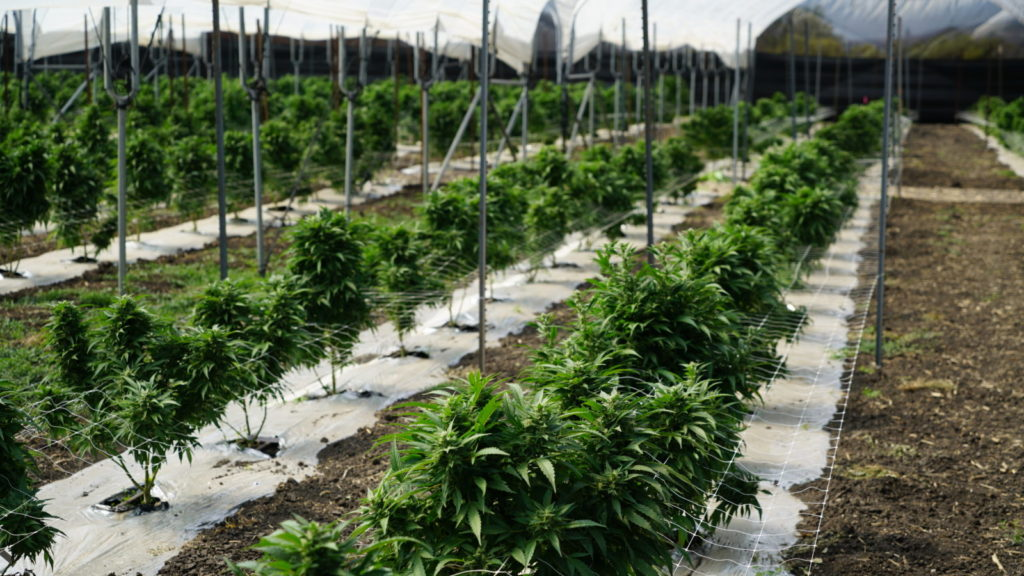Gov't swaps land with HLSCC to 'facilitate establishment of medical marijuana industry'